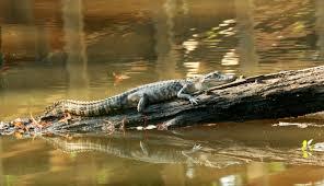 Mississippi wildlife images 15 absolutely gorgeous photos of mississippi wildlife jpg