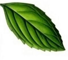 Teh Mint leaf mint plant 盞 free vector graphic on pixabay
