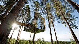 now that s a tree house startling pictures of homes in the