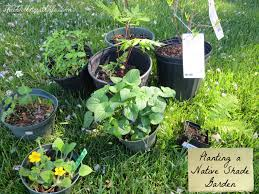 native plants of virginia planting my native shade garden the wellness wife
