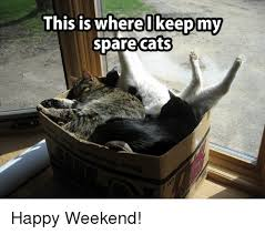Happy Weekend Meme - this is where i keep my spare cats happy weekend cats meme on me me