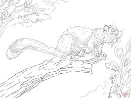 red squirrel on a tree coloring page free printable coloring pages