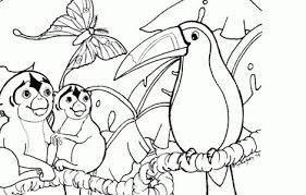 amazon rainforest coloring pages printables tropical color jungle