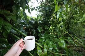 native plants in the tropical rainforest rainforest café u2013 humans of uga costa rica u2013 medium