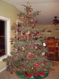 best 25 noble fir tree ideas on types of