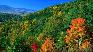 Most Picturesque Towns In Usa by Most Beautiful Forests In America American Forests