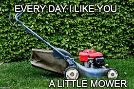Grass Memes - book your landscaping service at 727 202 9588 landscaping is