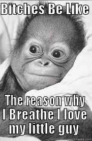 Baby Monkey Meme - funny baby monkey quickmeme