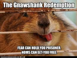 Good Luck Cat Meme - i can has cheezburger shawshank redemption funny animals online