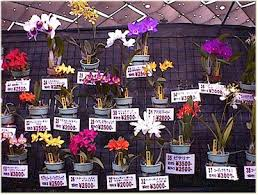 orchid plants for sale orchid care where to buy orchids