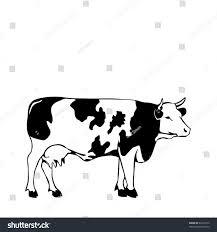 black white cow vector illustrator stock vector 62233372