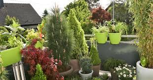 winterharte pflanzen balkon balkon gestaltung mit pflegeleichten immergrünen mein schöner garten