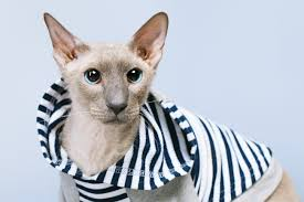 Halloween Costumes Cats Wear Awful Halloween Costumes Cats Pet Care Facts