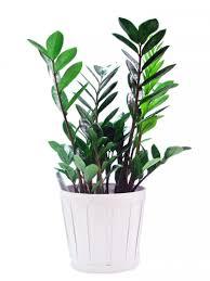 yubali indoor plants pictures