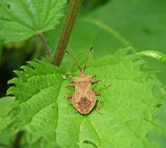 insects articles gardening know how