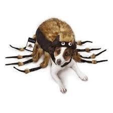 Large Dog Halloween Costume Ideas 41 Pets Halloween Costumes Images Pet
