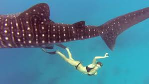 gopro awards ocean ramsey and a whale shark youtube