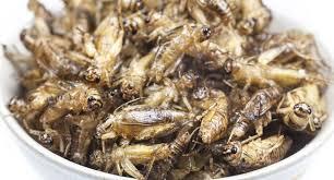 insectes dans la cuisine le premier aux insectes commercialisé en finlande 23 11