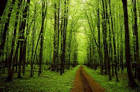 trees images path through trees wallpaper and background photos