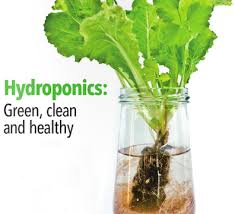 viewpoint organic food fight over hydroponics about money u2014and