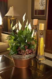 Modern Houseplants by 9 Best Indoor Gardens Images On Pinterest Exotic Houseplants