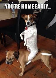 Oh You Dog Meme - you re home early surprised my dogs dog gives dog a piggyback