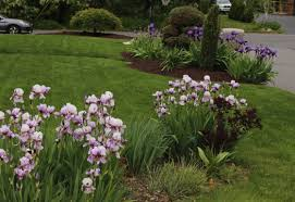 iris sorta like suburbia