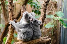 100 most adorable animals there u0027s a blog site out