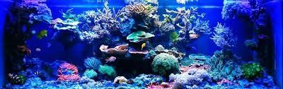 led lights for coral tanks led lights marine aquarium best led lighting for coral reef tanks