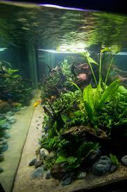 Japanese Aquascape by 155 Best Fishes Images On Pinterest Aquarium Ideas Aquascaping
