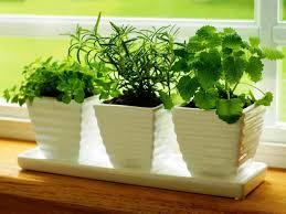 basic kitchen herb garden ideas