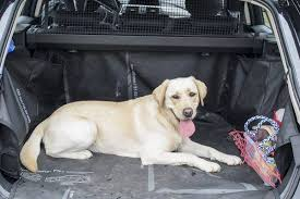 comment empecher mon chien de monter sur le canapé comment faire monter chien en voiture