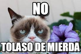 No Grumpy Cat Meme - no grumpy cat and flower meme on memegen