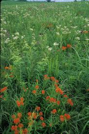 kansas native plant society missouri native plant society promoting the enjoyment