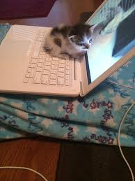 Cat Laptop Meme - she loves the warm air coming out of the laptop aww