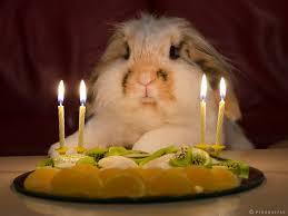 rabbit birthday bunny birthday by piruquitas on deviantart
