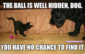 Dog Cat Meme - the ball is well hidden funny kitten meme