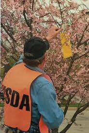 usda customer help desk usda conducting fruit fly surveys this year wbfo