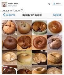 Towel Meme - puppy or bagel meme popsugar pets
