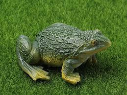 garden frogs co uk