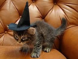 Cat Halloween Costumes Cats 25 Halloween Costumes Cats Ideas Cat