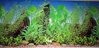 Aquascape Shop Aquascape Design And Maintenance Services Agri Ornament Fish