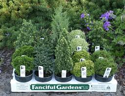 293 best mini gardens images on fairies garden