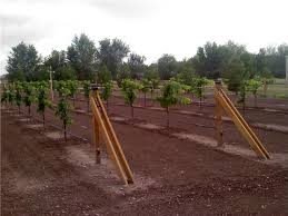 How To Grow Grapes In Your Backyard by How To Grow Grapes Archives Page 3 Of 9 Free Grape Growing