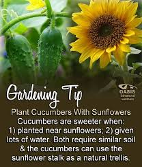 Make Your Own Cucumber Trellis 208 Best Veg Cucumber Images On Pinterest Cucumber Gardening