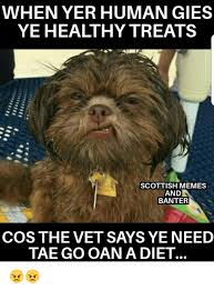 Scottish Memes - when yer human gies ye healthy treats scottish memes and banter cos