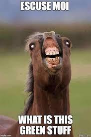 Meme Moi - horse face imgflip