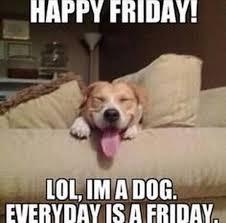 Finally Friday Meme - 335 best weekdays images on pinterest funny stuff monday humor