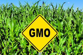 What Are Gmos And Why Should I Care Keena S Kitchen