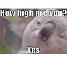 4 20 humor the best weed jokes and memes for 4 20